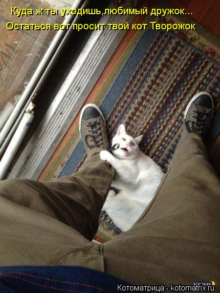 Котоматрица: Куда ж ты уходишь,любимый дружок... Остаться вот просит твой кот Творожок