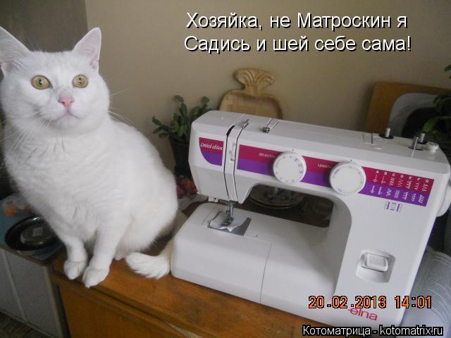 Котоматрица: Хозяйка, не Матроскин я Садись и шей себе сама!