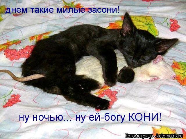 Котоматрица: днем такие милые засони! ну ночью... ну ей-богу КОНИ!