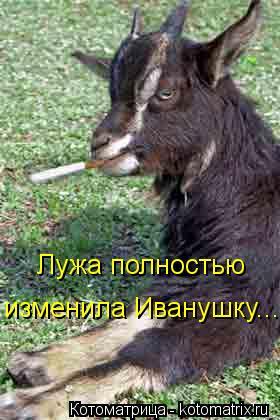 Котоматрица: Лужа полностью изменила Иванушку...