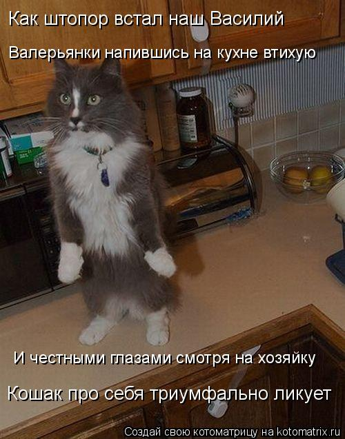 Котоматрица: Как штопор встал наш Василий Валерьянки напившись на кухне втихую И честными глазами смотря на хозяйку Кошак про себя триумфально ликует