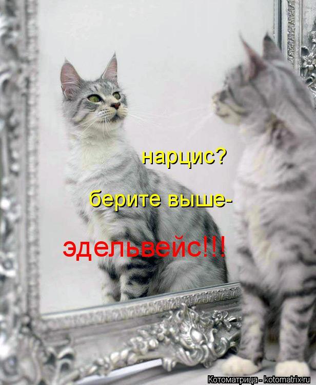 http://kotomatrix.ru/images/lolz/2013/02/24/kotomatritsa_jA.jpg