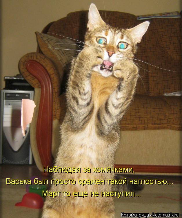 Котоматрица: Наблюдая за хомячками,  Васька был просто сражен такой наглостью... Март то еще не наступил...