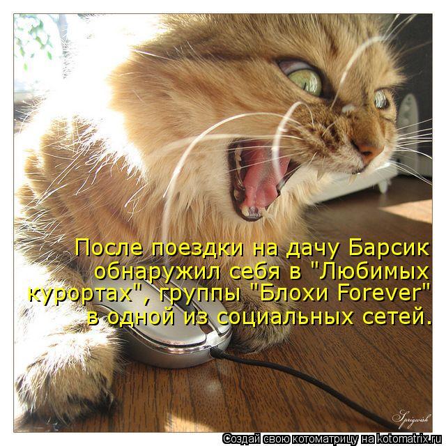 """Котоматрица: После поездки на дачу Барсик обнаружил себя в """"Любимых в одной из социальных сетей.  курортах"""", группы """"Блохи Forever"""""""