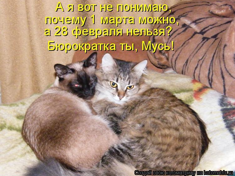 Котоматрица: А я вот не понимаю,  почему 1 марта можно,  Бюрократка ты, Мусь! а 28 февраля нельзя?