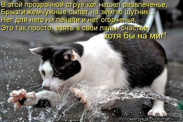 Котоматрица: В этой прозрачной струе кот нашел развлеченье, Брызги жемчужные сыпет на землю шутник… Нет для него ни печали и нет огорченья, Это так прос