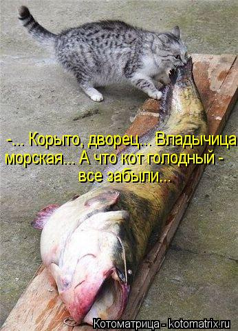 Котоматрица: -... Корыто, дворец... Владычица морская... А что кот голодный - все забыли...