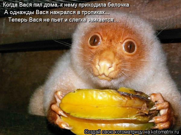 Котоматрица: Когда Вася пил дома, к нему приходила белочка А однажды Вася нажрался в тропиках... Теперь Вася не пьет и слегка заикается...