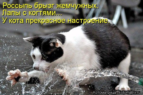 Котоматрица: Россыпь брызг жемчужных. Лапы с когтями... У кота прекрасное настроение.