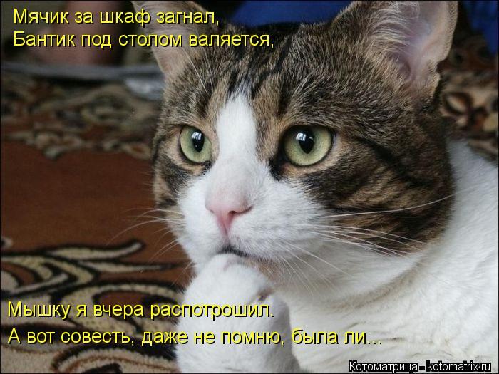 Котоматрица: Мышку я вчера распотрошил. А вот совесть, даже не помню, была ли...  Мячик за шкаф загнал, Бантик под столом валяется,