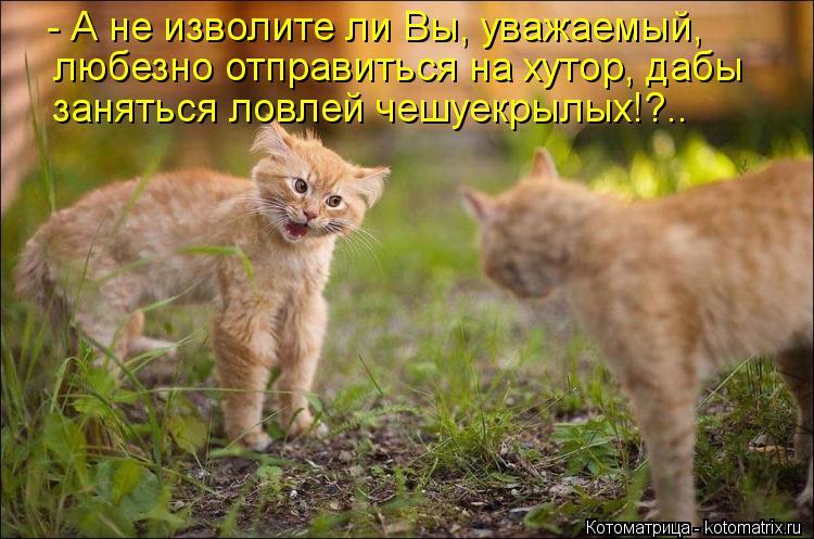 Котоматрица: - А не изволите ли Вы, уважаемый, любезно отправиться на хутор, дабы заняться ловлей чешуекрылых!?..