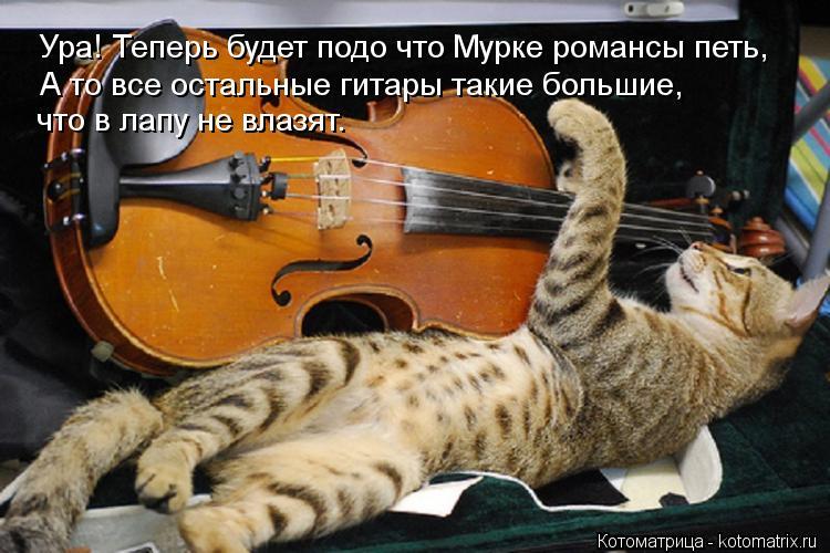 Котоматрица: Ура! Теперь будет подо что Мурке романсы петь, А то все остальные гитары такие большие, что в лапу не влазят.