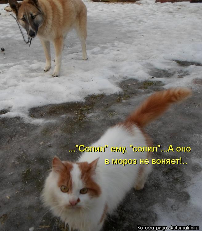 "Котоматрица: ...""Солил"" ему, ""солил""...А оно в мороз не воняет!.."