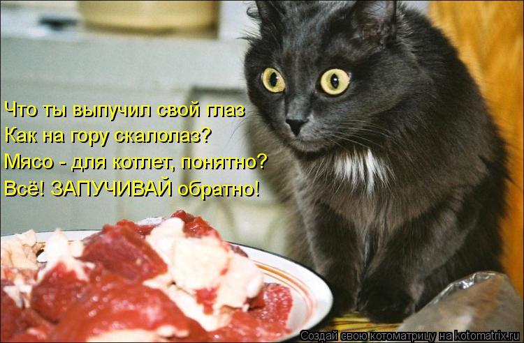 Котоматрица: Что ты выпучил свой глаз Как на гору скалолаз? Мясо - для котлет, понятно? Всё! ЗАПУЧИВАЙ обратно!
