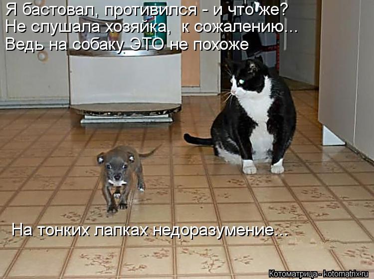 Котоматрица: Я бастовал, противился - и что же? Не слушала хозяйка,  к сожалению... Ведь на собаку ЭТО не похоже На тонких лапках недоразумение...