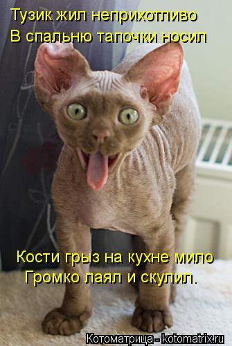 Котоматрица: Тузик жил неприхотливо В спальню тапочки носил Кости грыз на кухне мило Громко лаял и скулил.