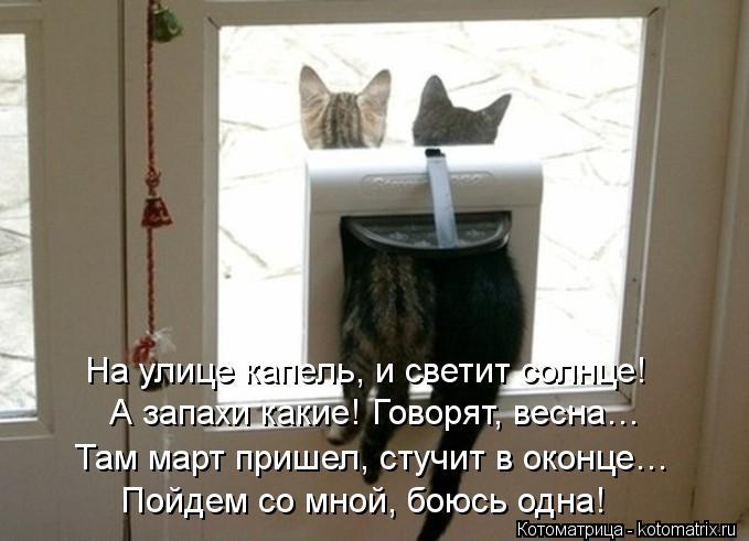 Котоматрица: На улице капель, и светит солнце! А запахи какие! Говорят, весна… Там март пришел, стучит в оконце… Пойдем со мной, боюсь одна!