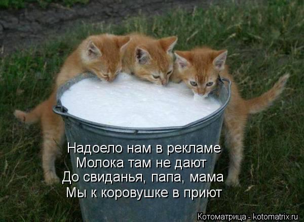 Котоматрица: Надоело нам в рекламе Молока там не дают До свиданья, папа, мама Мы к коровушке в приют