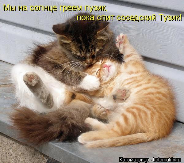 Котоматрица: пока спит соседский Тузик! Мы на солнце греем пузик,