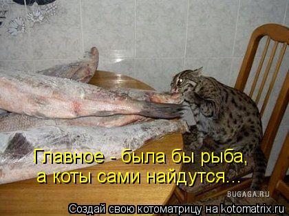 Котоматрица: Главное - была бы рыба, а коты сами найдутся...