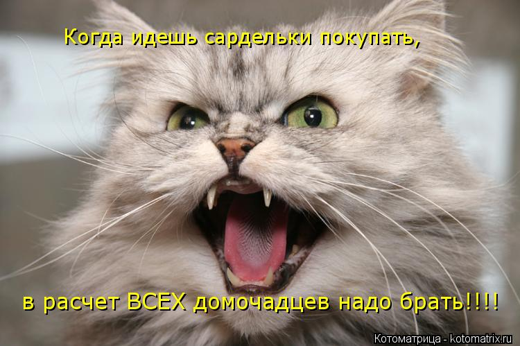 Котоматрица: Когда идешь сардельки покупать, в расчет ВСЕХ домочадцев надо брать!!!!