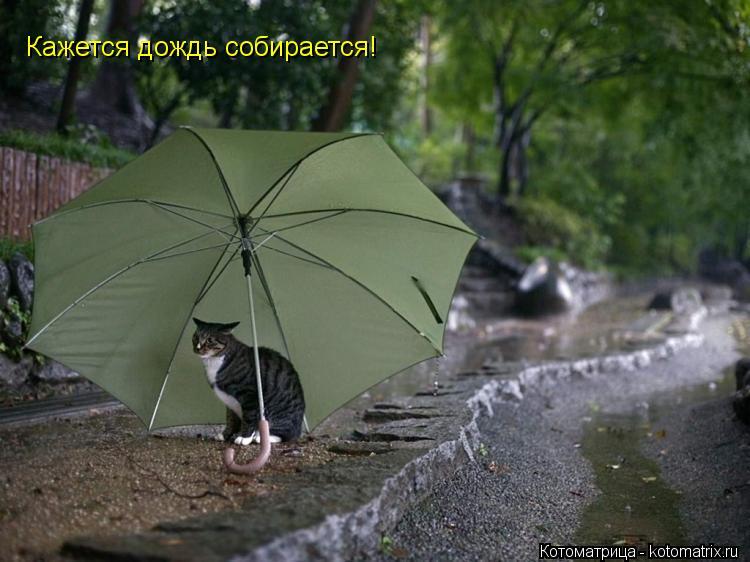 Котоматрица: Кажется дождь собирается!
