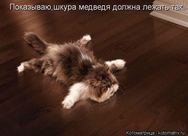 Котоматрица: Показываю,шкура медведя должна лежать так.