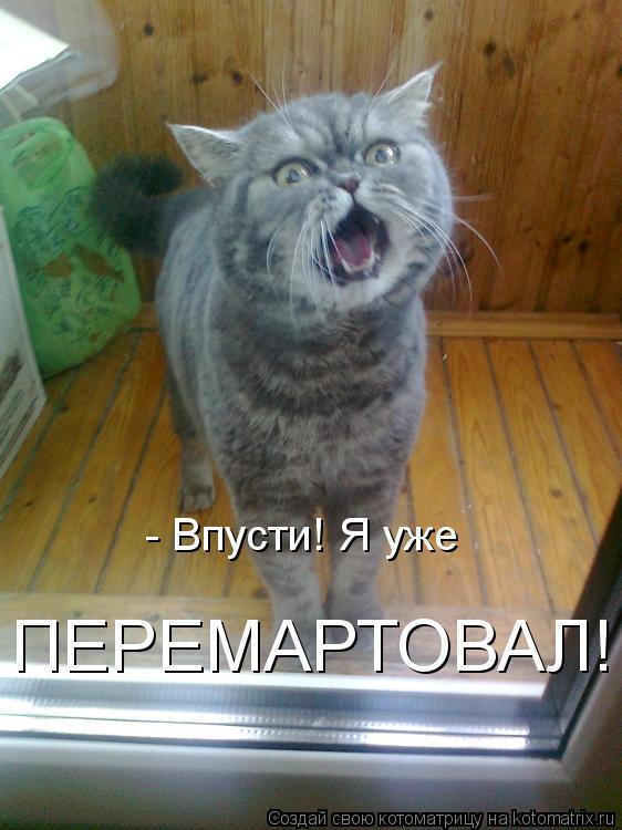 Котоматрица: - Впусти! Я уже  ПЕРЕМАРТОВАЛ!