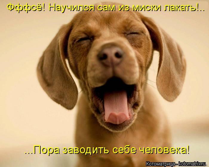 Котоматрица: Фффсё! Научился сам из миски лакать!.. ...Пора заводить себе человека!