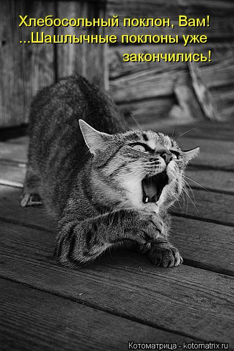 Котоматрица: Хлебосольный поклон, Вам! ...Шашлычные поклоны уже закончились!
