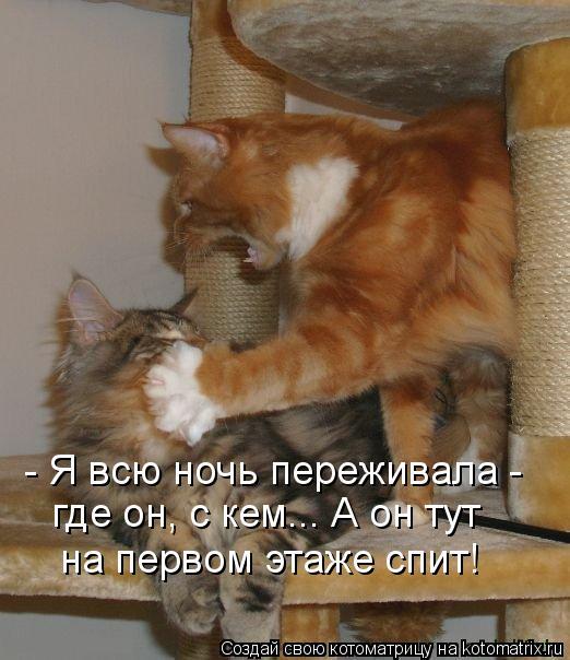 Котоматрица: - Я всю ночь переживала -  где он, с кем... А он тут на первом этаже спит!