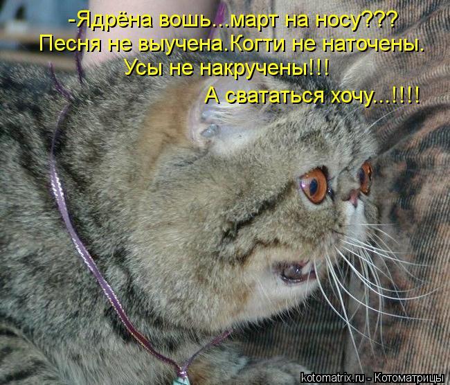 Котоматрица: -Ядрёна вошь...март на носу??? Песня не выучена.Когти не наточены. Усы не накручены!!! А свататься хочу...!!!!