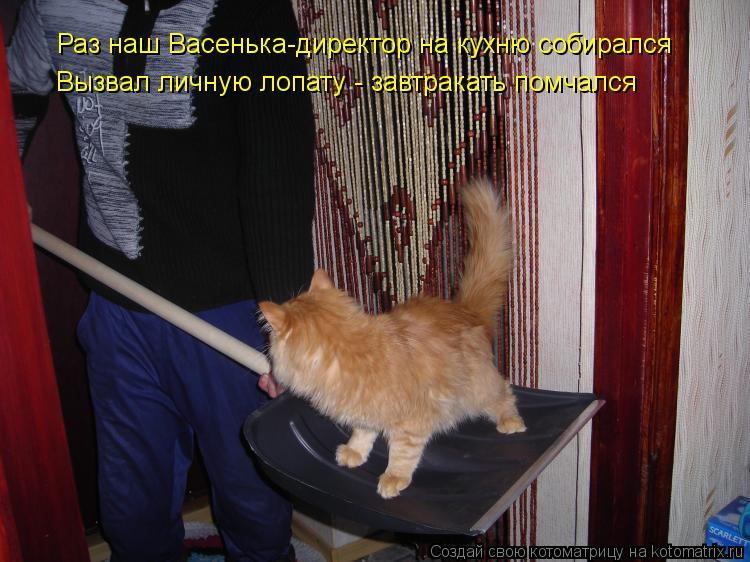 Котоматрица: Раз наш Васенька-директор на кухню собирался Вызвал личную лопату - завтракать помчался
