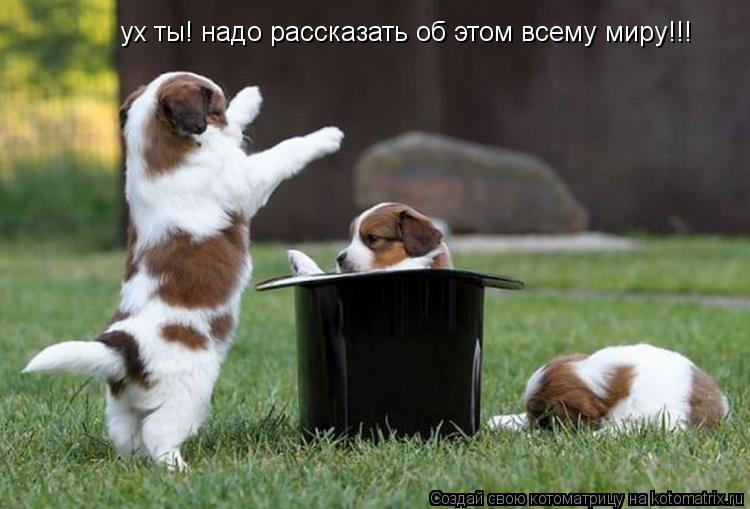 Котоматрица: ух ты! надо рассказать об этом всему миру!!!