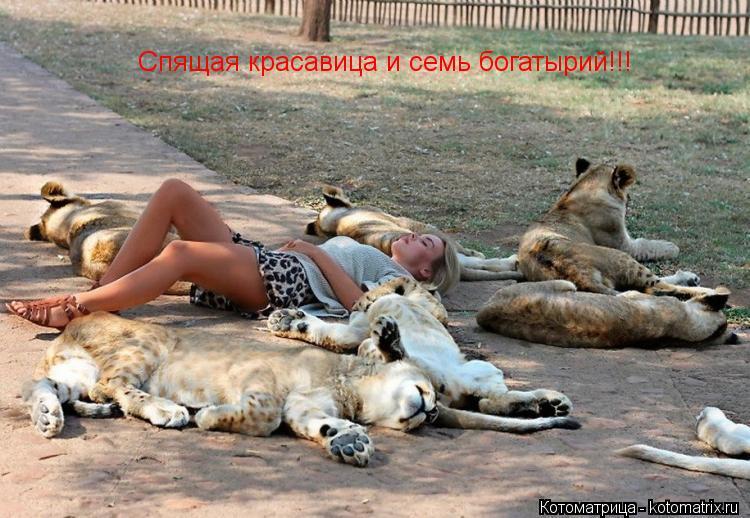 Котоматрица: Спящая красавица и семь богатырий!!!