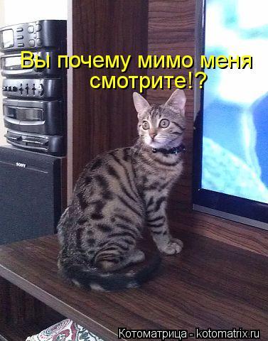 Котоматрица: Вы почему мимо меня  смотрите!?