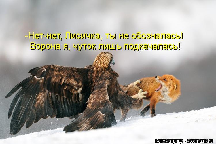 Котоматрица: Ворона я, чуток лишь подкачалась! -Нет-нет, Лисичка, ты не обозналась!
