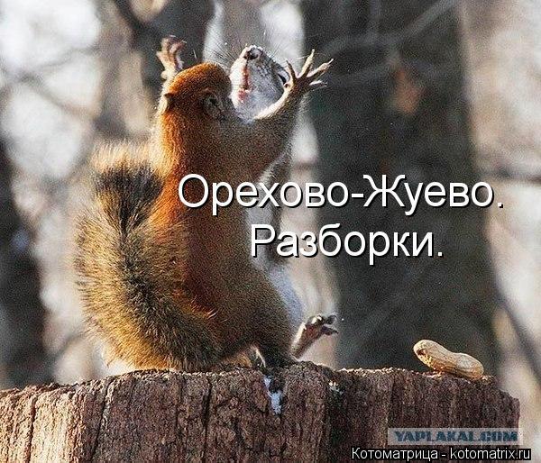 Котоматрица: Орехово-Жуево. Разборки.