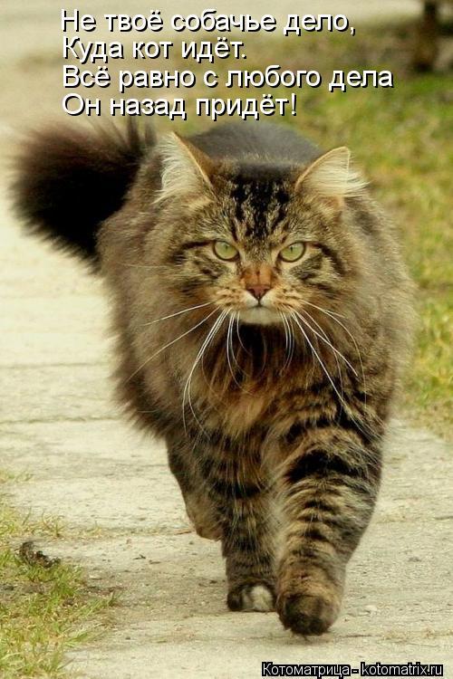 Котоматрица: Не твоё собачье дело, Куда кот идёт. Всё равно с любого дела Он назад придёт!