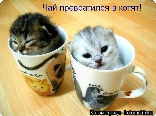 Котоматрица: Чай превратился в котят!