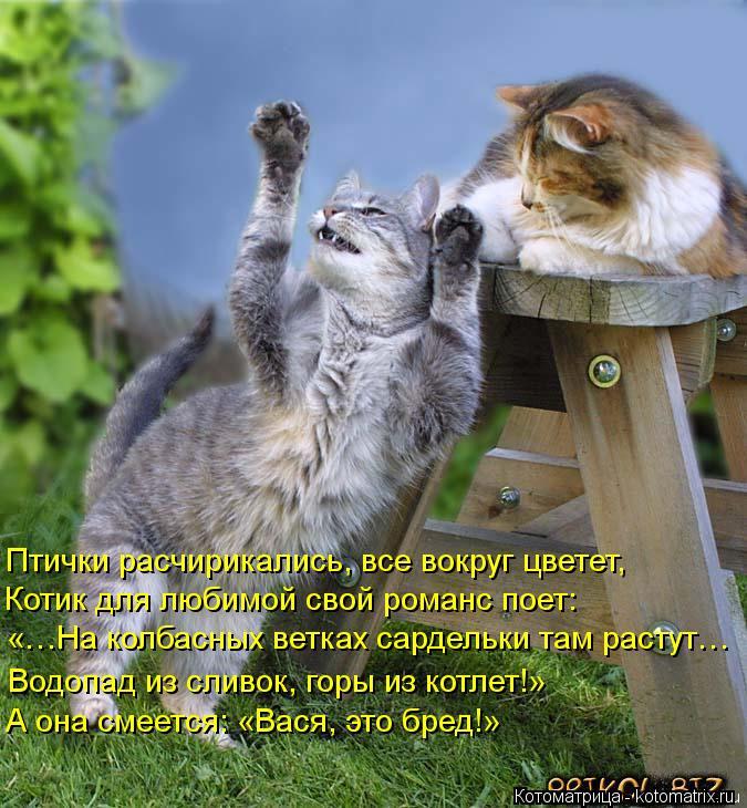 Котоматрица: Птички расчирикались, все вокруг цветет, Котик для любимой свой романс поет: «…На колбасных ветках сардельки там растут… Водопад из сливо