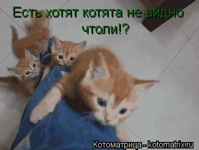 Котоматрица: Есть хотят котята не видно  чтоли!?