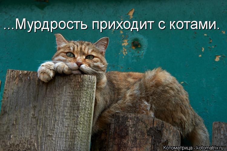 Котоматрица: ...Мурдрость приходит с котами.