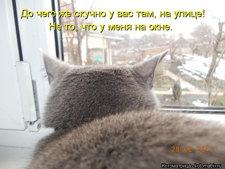 Котоматрица: До чего же скучно у вас там, на улице! Не то, что у меня на окне.
