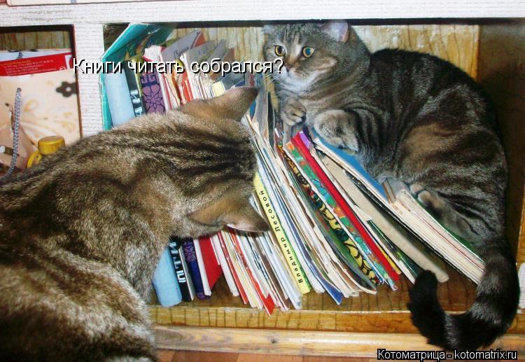 Котоматрица: Книги читать собрался?