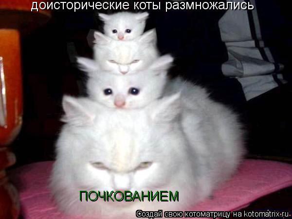 Котоматрица: доисторические коты размножались  ПОЧКОВАНИЕМ