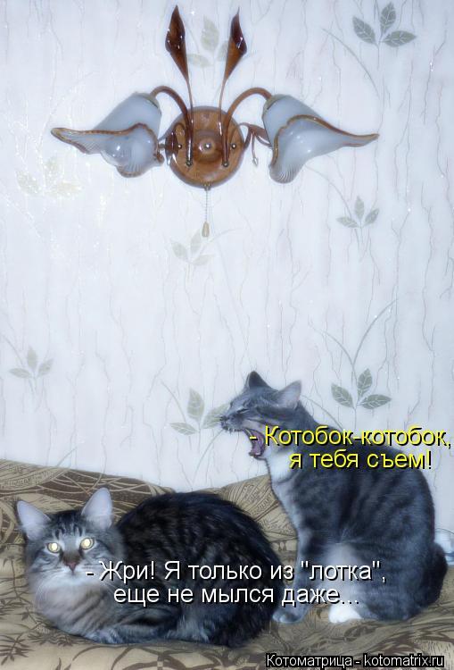 """Котоматрица: - Котобок-котобок,  я тебя съем! - Жри! Я только из """"лотка"""",  еще не мылся даже..."""