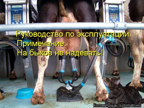 Котоматрица: Руководство по эксплуатации. Примечание. На быков не надевать!