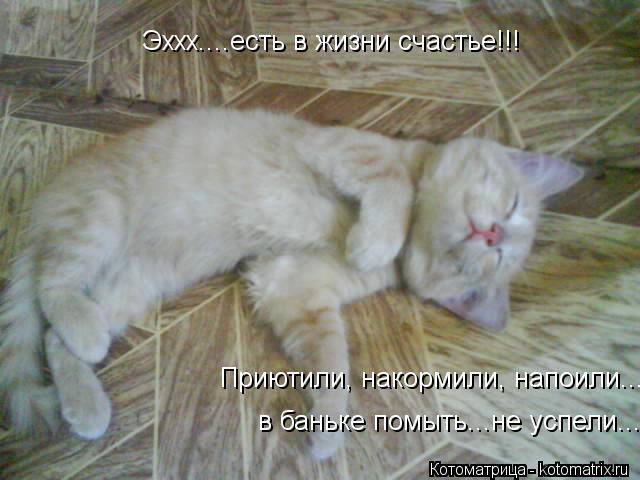 Котоматрица: Эххх....есть в жизни счастье!!!  Приютили, накормили, напоили.... в баньке помыть...не успели....