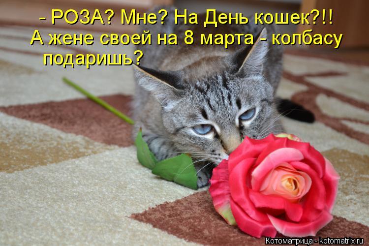 Котоматрица: - РОЗА? Мне? На День кошек?!! А жене своей на 8 марта - колбасу подаришь?